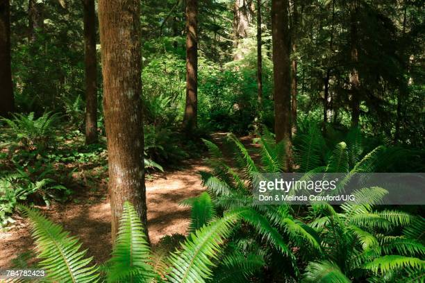walking trail in fort clatsop national historical park oregon - lewis and clark expedition stock pictures, royalty-free photos & images