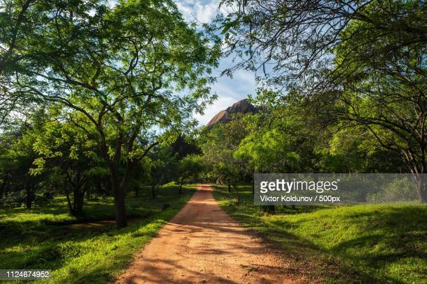 walking trails in mihintale sri lanka - mihintale stock pictures, royalty-free photos & images