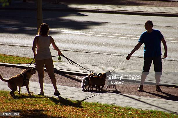 camminare con cani - diverbio foto e immagini stock