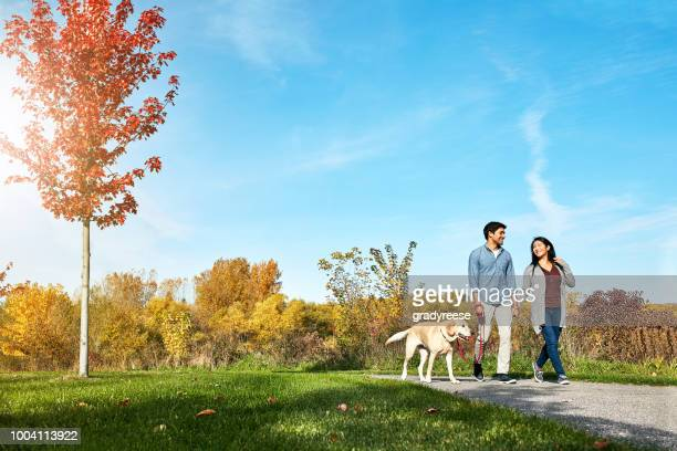 Walking your dog helps you stay more active