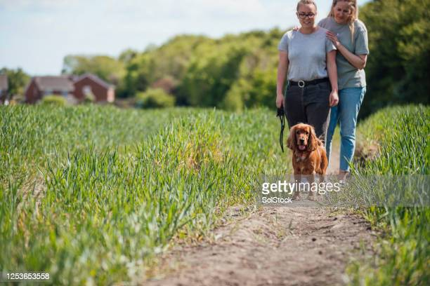walks with our dog - fiancé stock pictures, royalty-free photos & images