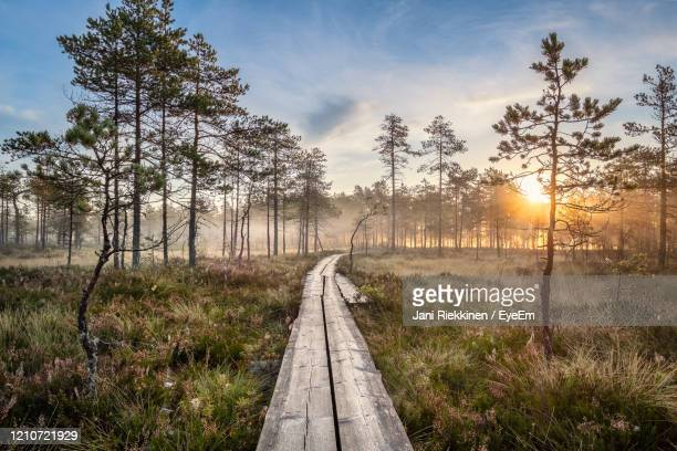 walkway amidst trees against sky during sunset - swamp stock pictures, royalty-free photos & images
