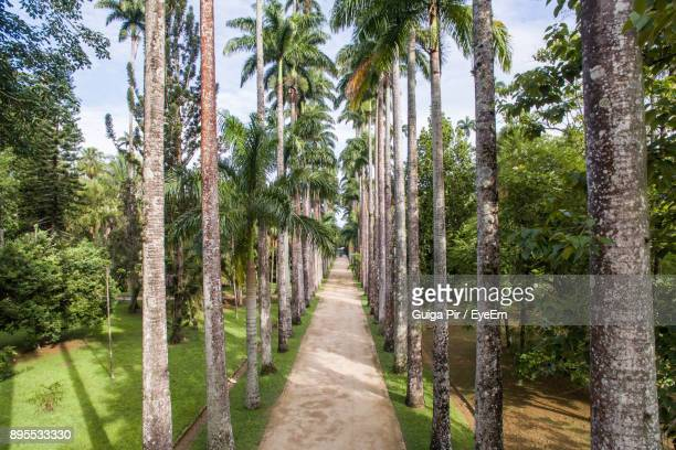 walkway amidst trees against sky - botanical garden stock pictures, royalty-free photos & images