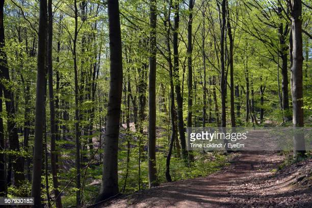 Walkway Amidst Trees In Forest Against Sky