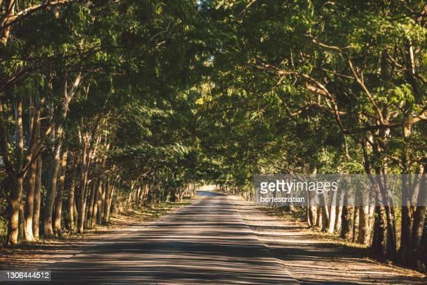 walkway amidst trees in forest - bortes stock-fotos und bilder