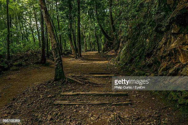 walkway amidst trees in forest - カンチャナブリ県 ストックフォトと画像
