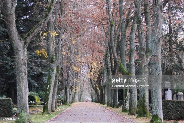 walkway amidst trees in forest - gerhard schimpf stock pictures, royalty-free photos & images
