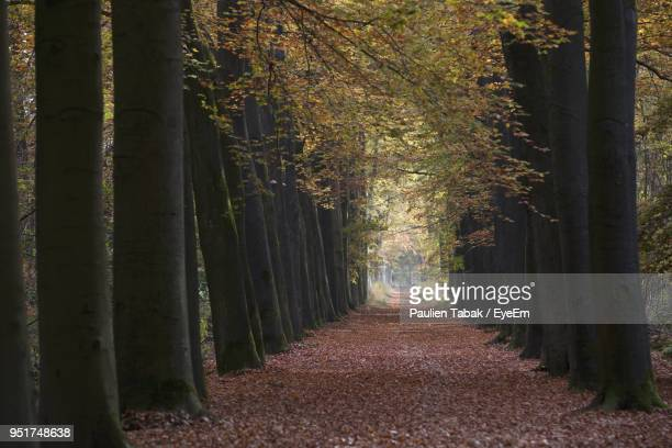 walkway amidst trees in forest - paulien tabak stock pictures, royalty-free photos & images