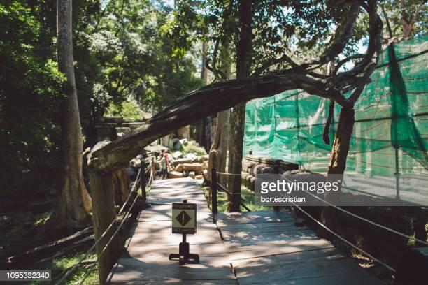 walkway amidst trees - bortes foto e immagini stock