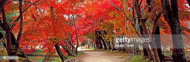 Walkway and Autumn colors