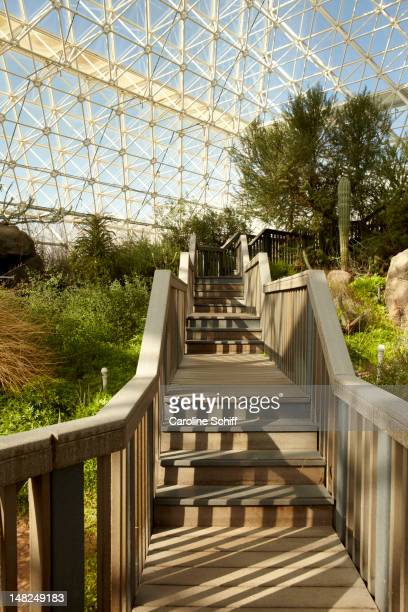 Walkway and plants in greenhouse