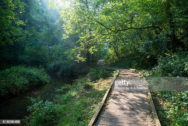 Walkway beside a beautiful woodland stream