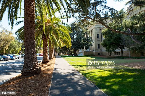 Walkway passing a row of palm trees and a manicured green lawn outside the Canton Arts Center on a sunny day on the campus of Stanford University in...