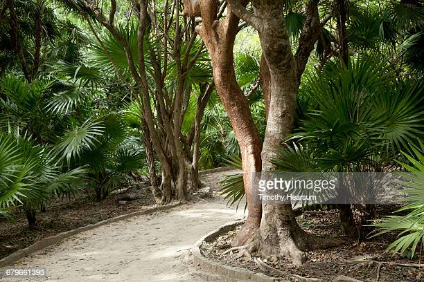 walkway through fan palm trees - timothy hearsum stockfoto's en -beelden