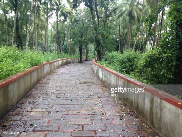 Walkway Through Plantation