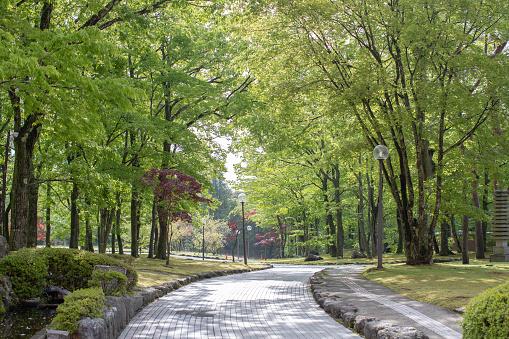 walkway with street lamp in garden. 996110690