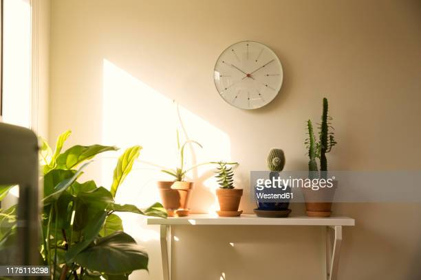 wall clock and potted plants on shelf in a living room - 収納ラック ストックフォトと画像
