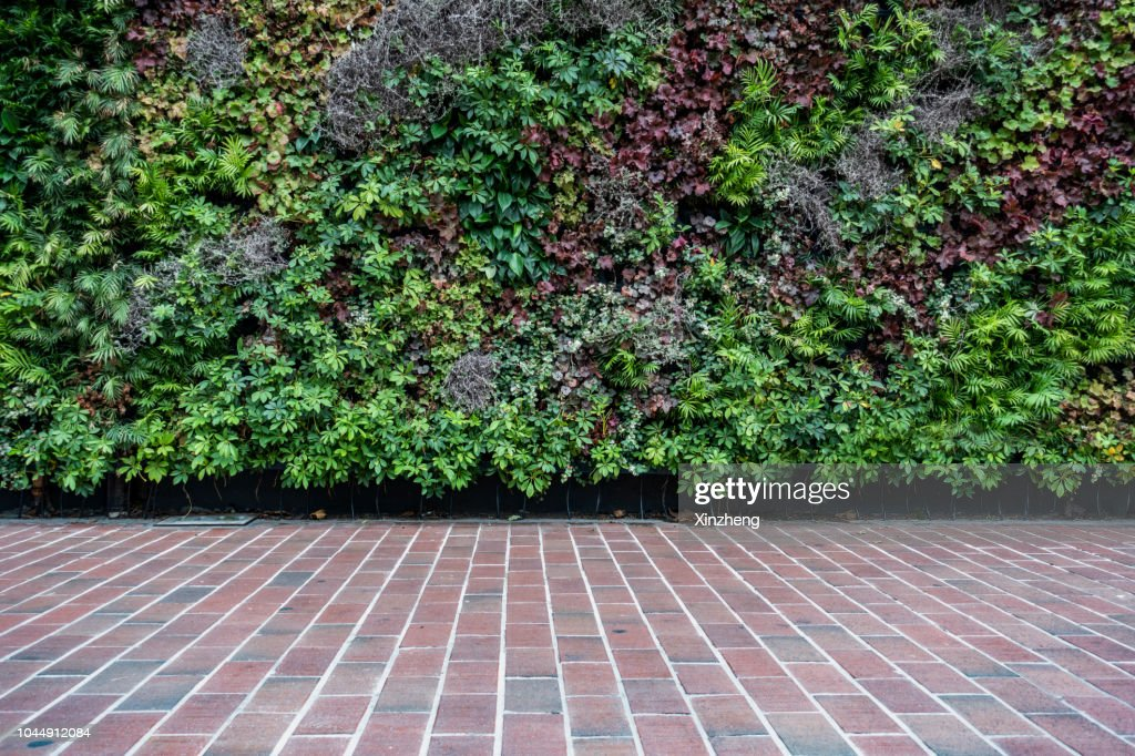 Wall decorated with the plants : Stock Photo