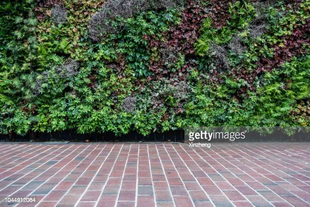 wall decorated with the plants - wall building feature stock pictures, royalty-free photos & images