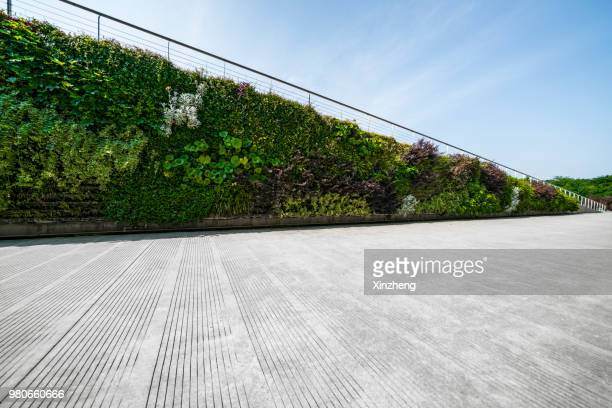 wall decorated with the plants - courtyard stock photos and pictures