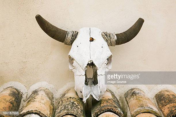 Wall mounted cattle skull, Granada, Spain