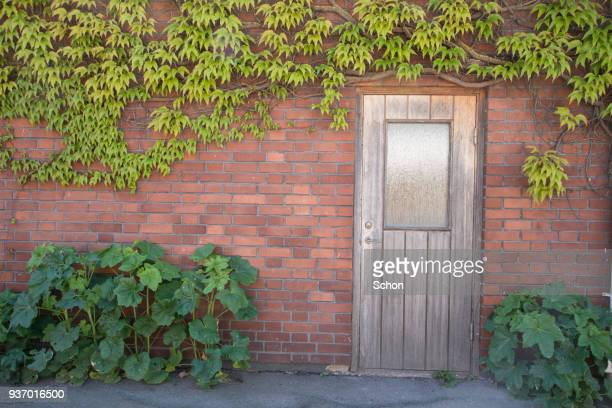 Wall of brick with vegetation and a door