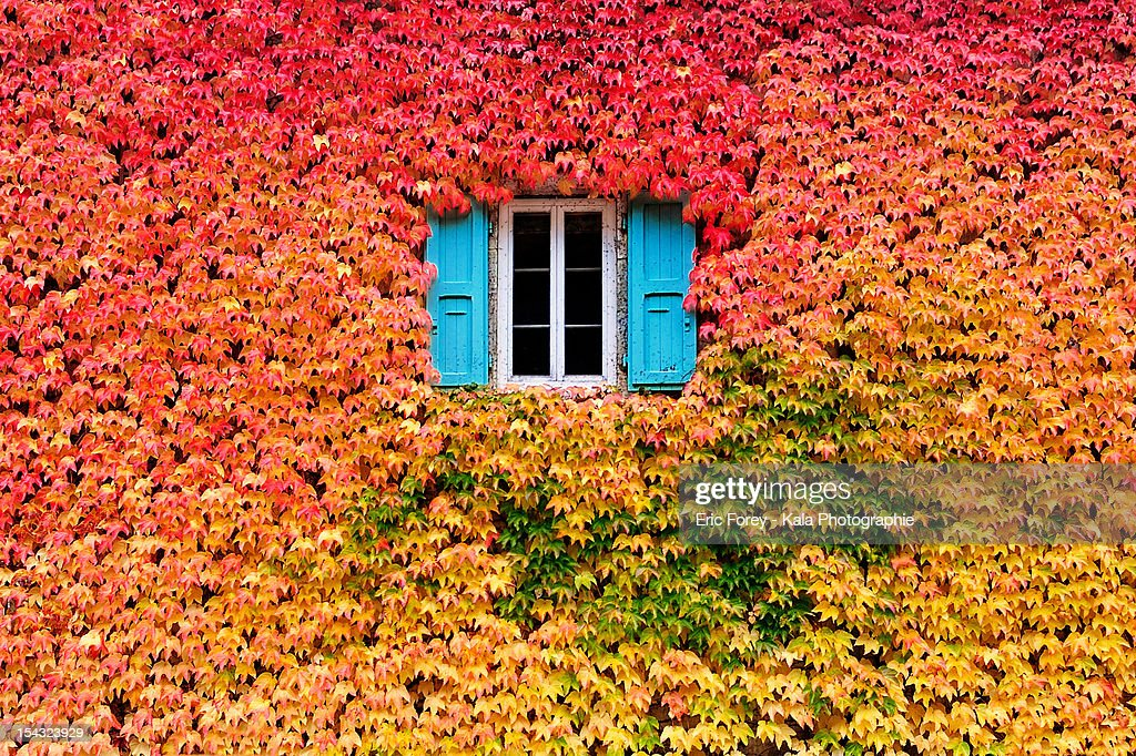 A wall of fall : Stock-Foto