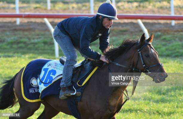 Wall of Fire during a trackwork session at Werribee Racecourse on October 3 2017 in Melbourne Australia