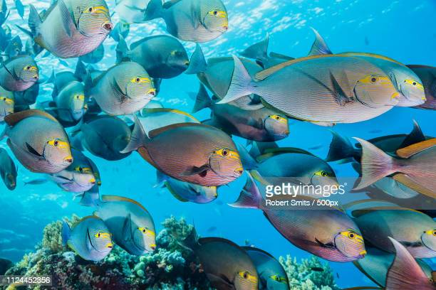 wall of fish - east nusa tenggara stock pictures, royalty-free photos & images
