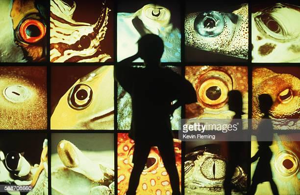 Wall of Fisheyes