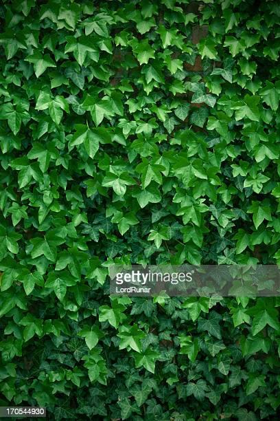 Wand der Blätter