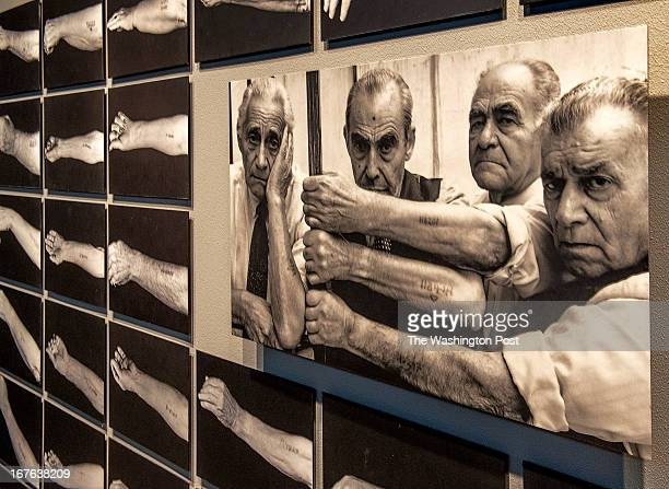 A wall of photographs depicting still visible tattoos on Auschwitz survivors at the United States Holocaust Musuem which is about to celebrate its'...
