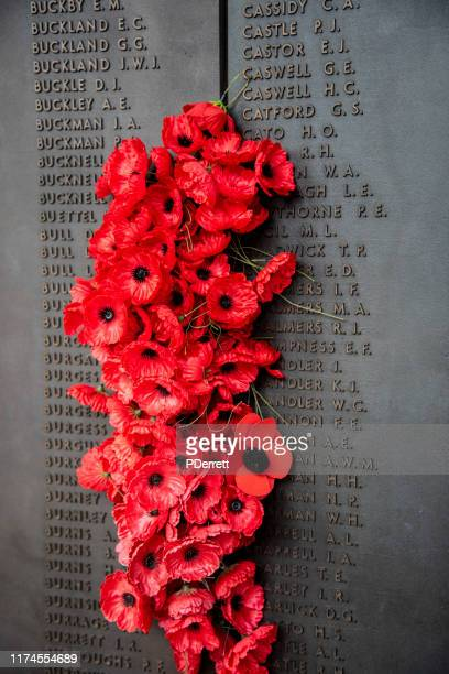 wall of remembrance at the australian war memorial. poppies placed next to the names of the dead. - memorial day background stock pictures, royalty-free photos & images