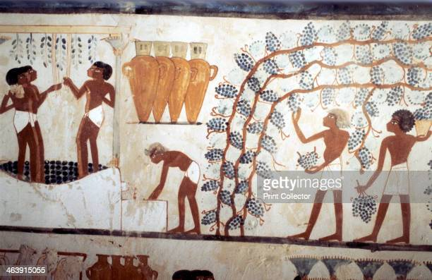 Wall painting from the tomb of the scribe Menna Thebes Ancient Egyptian 18th dynasty c14191380 BC Scene of the Vendage picking grapes in a vineyard...