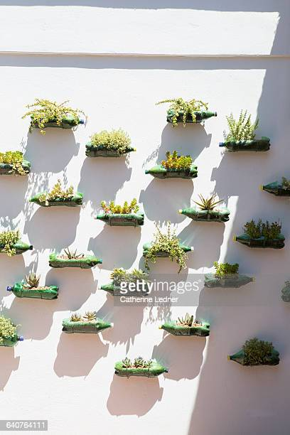 Wall planters made from plastic soda bottles