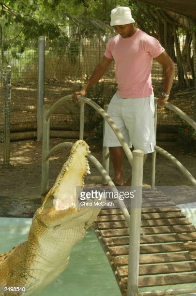 Wallaby captain George Gregan watches a crocodile lunge out of the water during a visit to the Darwin Crocodile Farm September 16 2003 in Darwin...