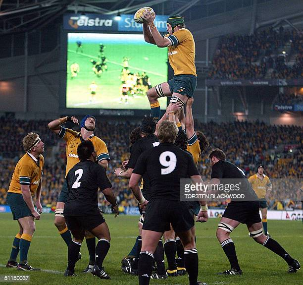 Wallaby Justin Harrison gains possession in a line-out during the Bledisloe Cup Tri-nations rugby union Test at Telstra Stadium in Sydney, 07 August...