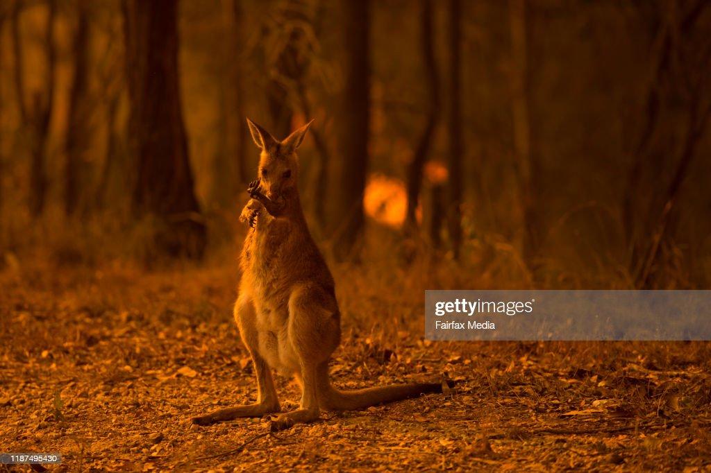 Bushfires Sweep Across The Mid North Coast of NSW : News Photo