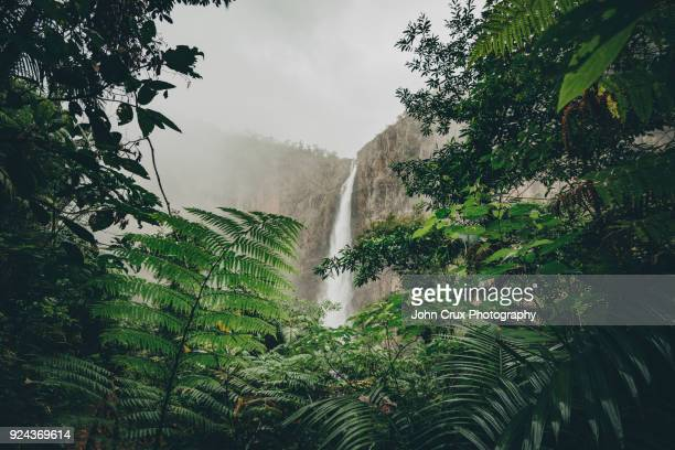 wallaman falls jungle - townsville australia fotografías e imágenes de stock