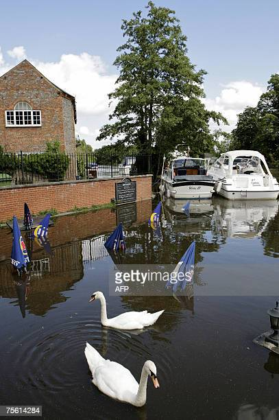 Swans swim amongst the submerged terrace and tables due to heavy rain in Wallingford Oxfordshire central England 24 July 2007 Thousands of homes...