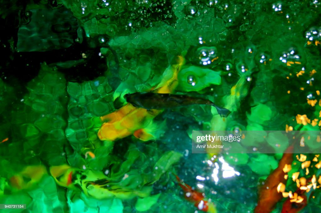 Seamless underwater texture Simple Water Wallpaper Background Effects In Fish Aquarium Getty Images Seamless Underwater Texture Stock Photos And Pictures Getty Images