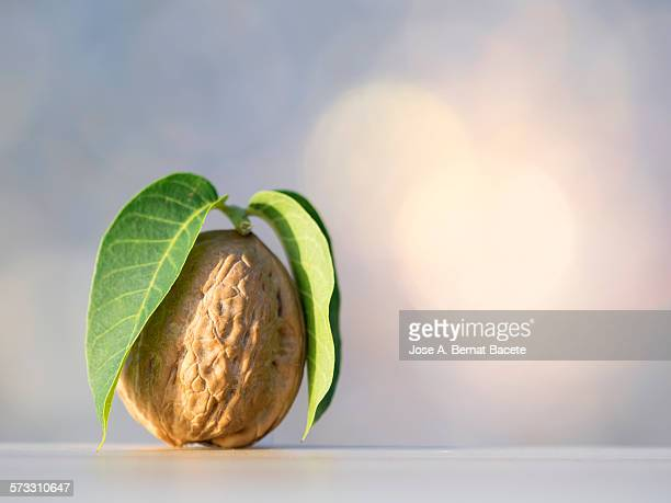 Walnut on a wooden table