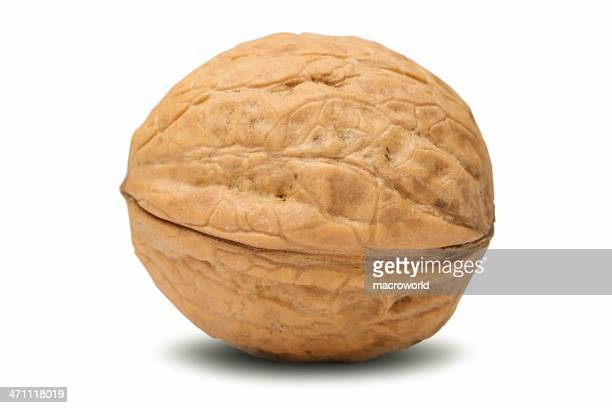walnut (isolated) - nutshell stock photos and pictures