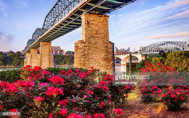 walnut street bridge, chattanooga, tennessee, us - tennessee stock pictures, royalty-free photos & images