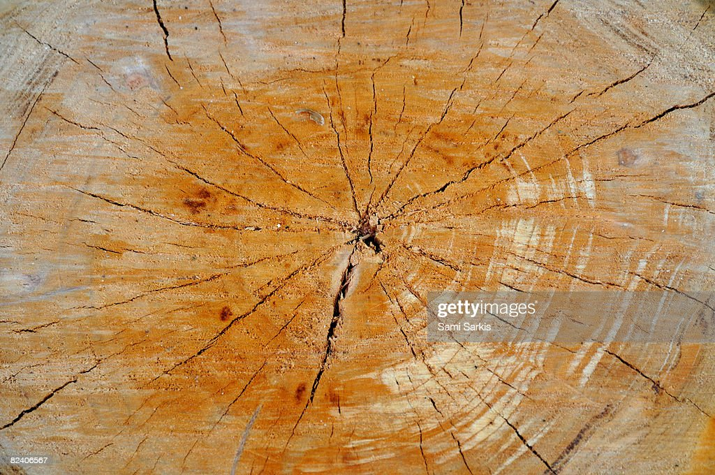 Walnut Tree Trunk Detail Closeup Stock Photo - Getty Images