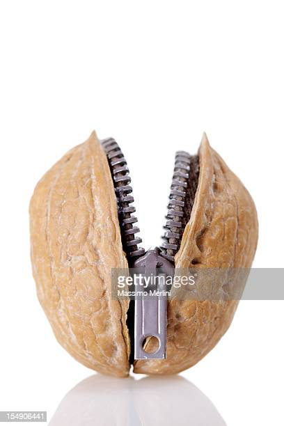 walnut zipper - nutshell stock photos and pictures