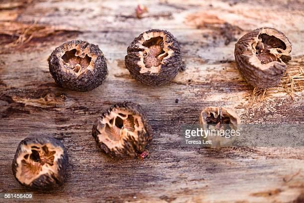 Walnuts on a tree stump