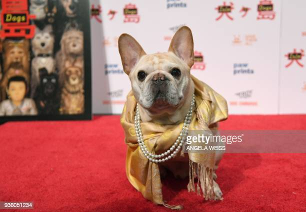 'Walter' attends the paw sprints special screening of 'Isle of Dogs' at IFC CENTER on March 21 2018 in New York City / AFP PHOTO / ANGELA WEISS