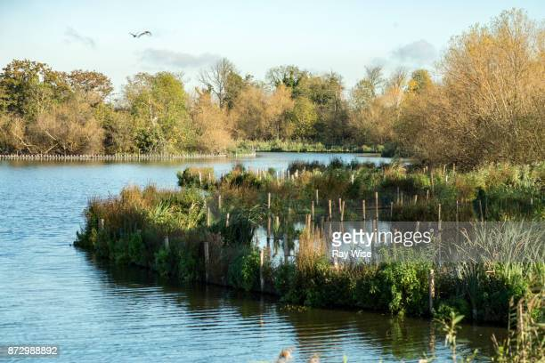walthamstow wetlands nature reserve - marsh stock pictures, royalty-free photos & images