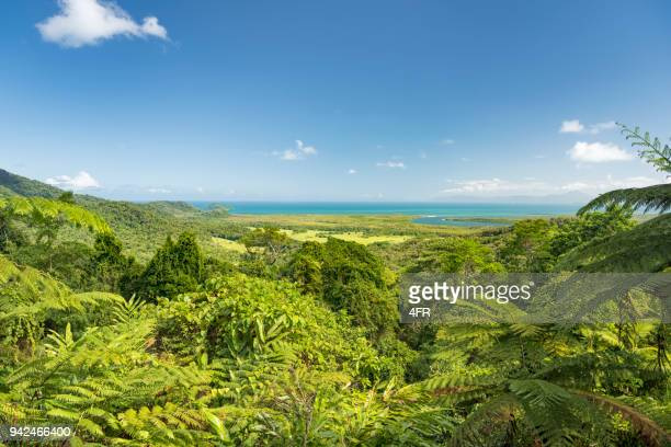 walu wugirriga lookout, daintree river national park, queensland, australia - queensland stock pictures, royalty-free photos & images